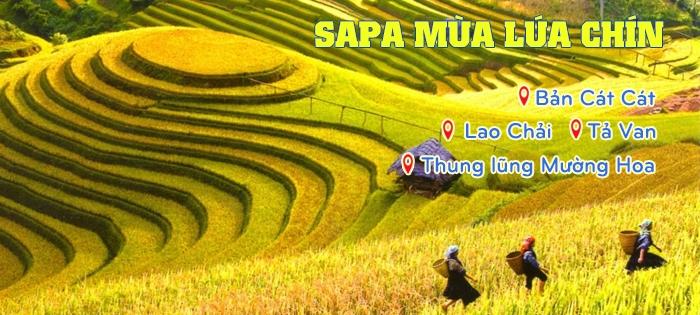 Top 5 địa điểm đẹp nên đến khi đi du lịch Sapa.